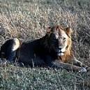 LION PHI 15 ML