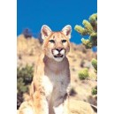 MOUNTAIN LION/PUMA WEA 30 ML