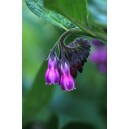 COMFREY 7.5 ML ALAS F SUP
