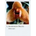 cartes orchid a