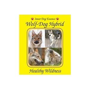 Wolf-dog Hybrid /  Sauvagerie saine!