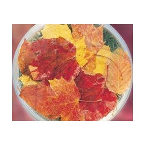 AUTUMN LEAVES BUSH 15ML